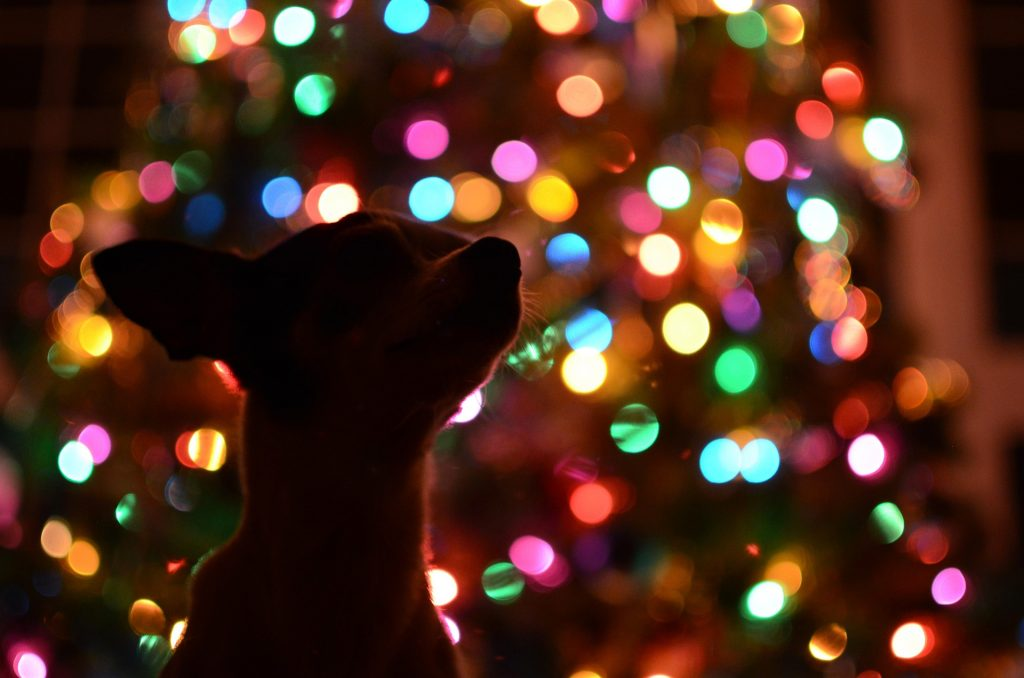 Back view of dog looking at a christmas tree