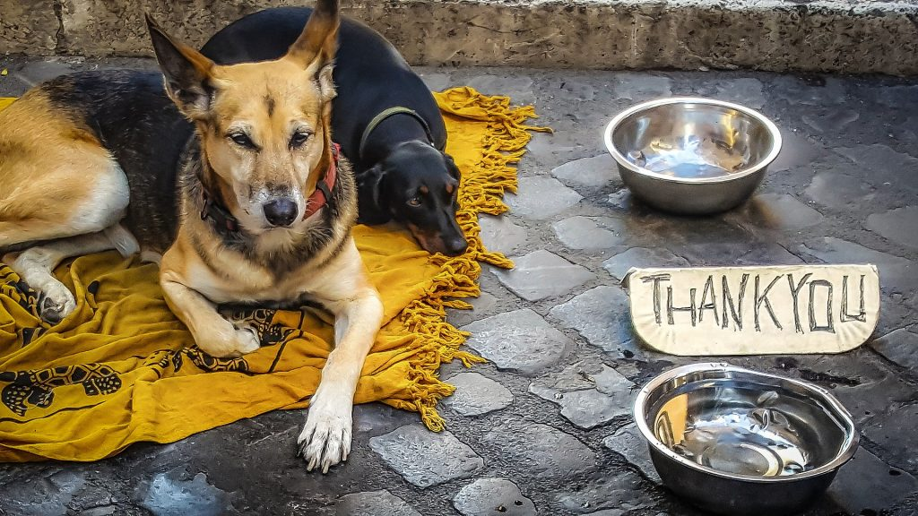 Two dogs lying on the floor with metal bowls and thank you sign