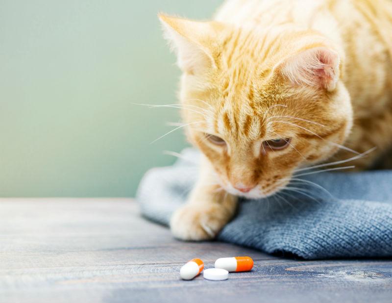 cat pill